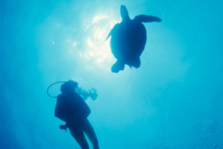 Dive with Turtles in Belize
