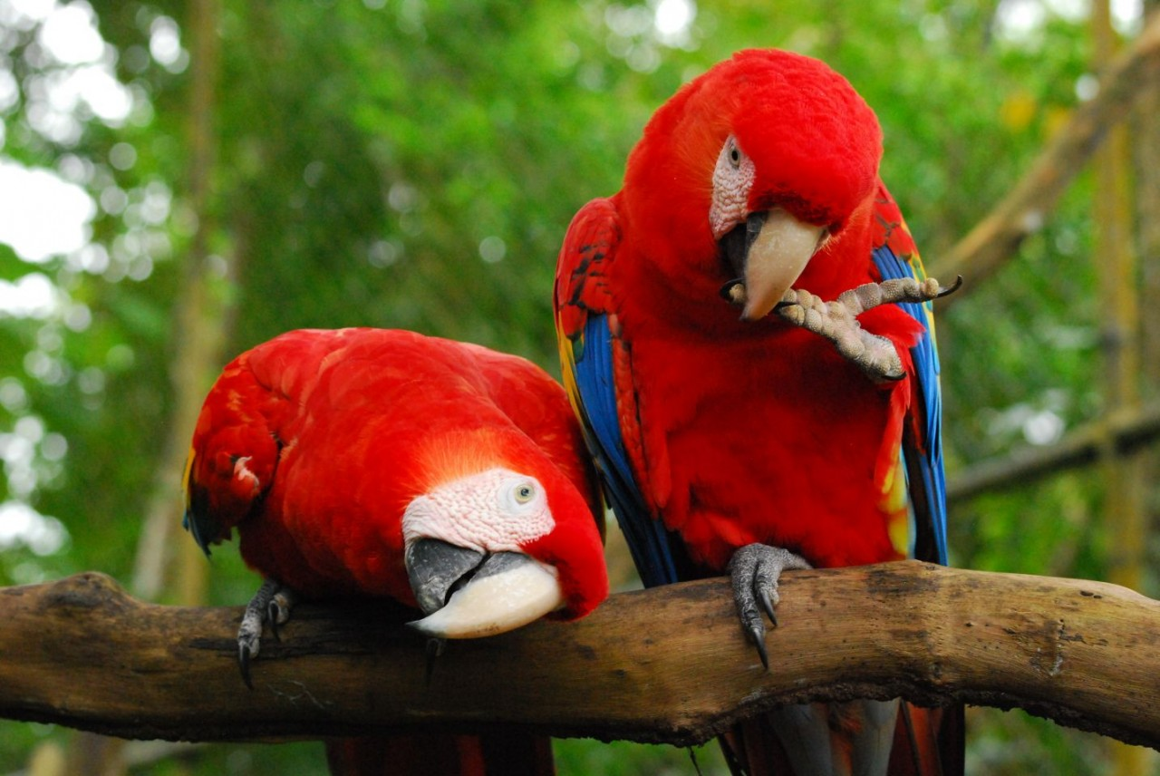 macaws-together