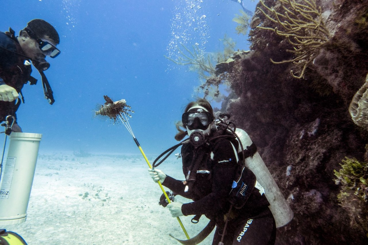spearing lionfish in belize