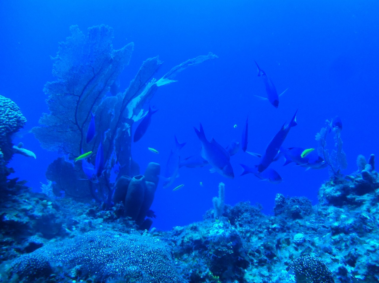 Divers Keeping the Barrier Reef Healthy: Lionfish Tournament in October